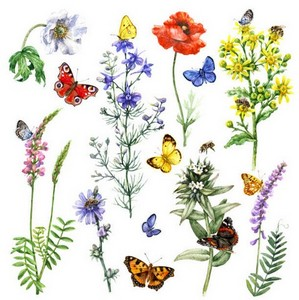 Pollinator drawing